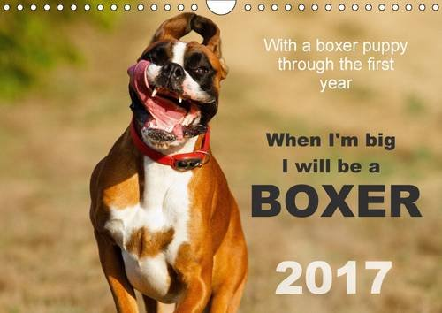 When I'm Big I Will be a Boxer/UK-Version 2017: With a Boxer Puppy Through the First Year 2015 (Calvendo Animals)