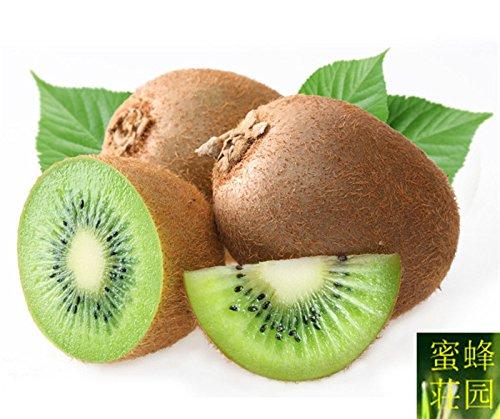 la sélection des semences linolénique arbres fruitiers des matières premières acide environ 100 graines