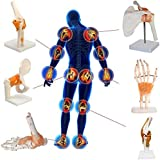 Modelo Educativo, Modelo Científico De Esqueleto De Muñeca Y Anatomía De La Articulación Humana, Mod...