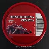 Angelköder : 15 Dendrobena / Rotwurm groß