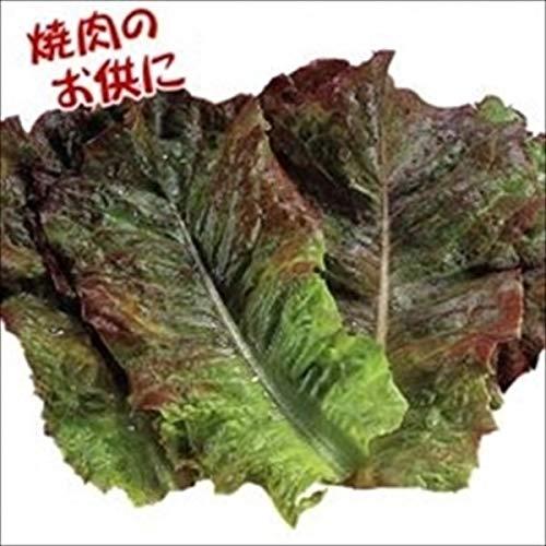 国華園 種 野菜たね レタス 赤焼肉レタス 1袋(3ml)/メール便配送