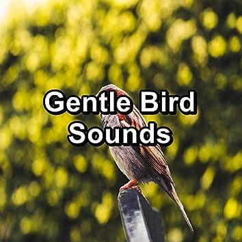 Gentle Bird Sounds