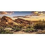 AWERT Fondo de vinilo duradero de 120 x 50 cm para hábitat de reptiles azul cielo oasis cactus sol y terrario del desierto (no adhesivo)