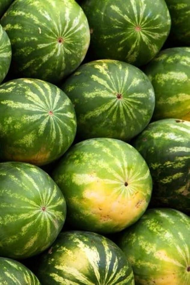 紳士新鮮なシェトランド諸島Watermelon Notebook