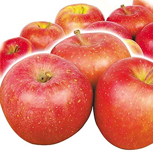国華園 りんご 青森産 早生ふじ 10� 1箱 食品