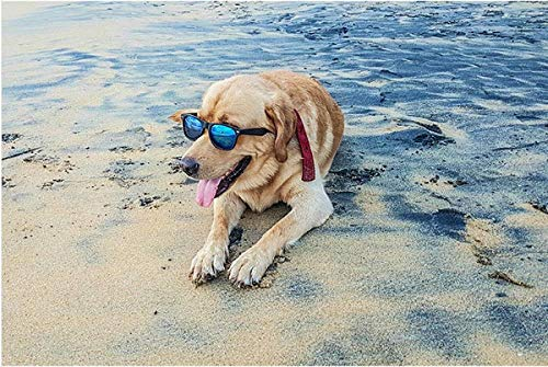 5d famosa pintura animal de playa con gafas de sol con gafas de sol diamante pintura Modern Home Wall Art 40 * 50cm