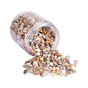 PandaHall Elite About 1400-1500 Pcs Tiny Sea Shell Ocean Beach Spiral Seashells Craft Charms Length 7-12mm for Candle Making, Home Decoration, Beach Theme Party Wedding Decor Fish Tank Vase Filler, NO HOLE