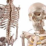 Anatomically Correct Skeletons