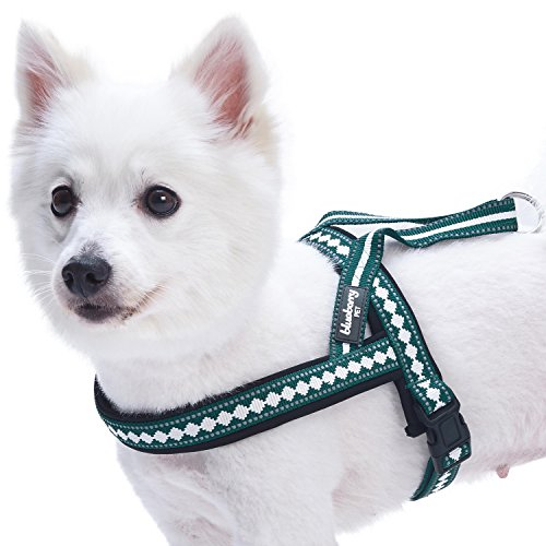 Blueberry Pet 7 Colors Soft & Comfy Jacquard Padded Dog Harness, Chest Girth 25.5 - 31.5, Teal Blue, M/L, Reflective Adjustable Harnesses for Dogs