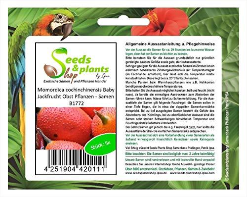 Stk - 5x Momordica cochinchinensis Baby Jackfrucht Obst Pflanzen - Samen B1772 - Seeds Plants Shop Samenbank Pfullingen Patrik Ipsa