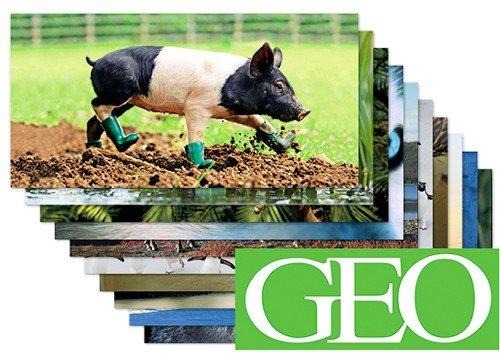 10-er Packung: Die 10 tierischsten GEO XXL-Postkarten +++ von modern times