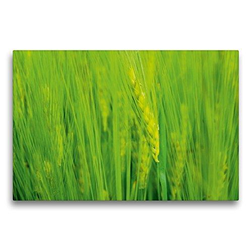 Premium Textil-Leinwand 75 x 50 cm Quer-Format Ähre | Wandbild, HD-Bild auf Keilrahmen, Fertigbild auf hochwertigem Vlies, Leinwanddruck von Susan Michel/CH