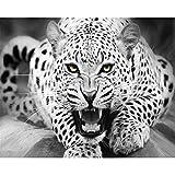 Pintar por Números Kits,Pintar por Numeros para Adultos Niños Leopardo blanco y negro DIY Conjunto Completo de Pinturas para el Hogar Decoraciones-Wooden_Frame_60x75cm E992