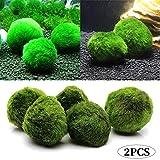 TOPFAY 2 3-4cm Plantes d'aquarium de Balle algues vivantes Accessoires Poissons...