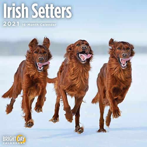 2021 Irish Setters Wall Calendar by Bright Day, 12 x 12 Inch, Cute Dog Puppy