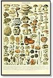 Vintage Champignons Tabla de identificación Impresiones de arte de pared Ciencia Póster educativo Setas Pintura botánica Retro Kid Room Decor 40x60cm Sin marco