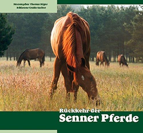 Rückkehr der Senner Pferde: Die älteste deutsche Pferderasse kommt in ihre Heimat zurück