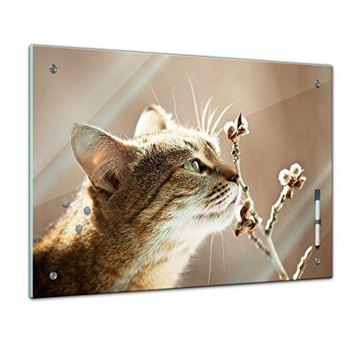 Memoboard 60 x 40 cm, Tiere - schnuppernde Katze - Memotafel Pinnwand - Tiermotive - Tierbild - Katze - Stubentiger - Kätzchen - Tier - Wohnzimmer - Katzenbild - Katzenmotiv - Küche - Handmade