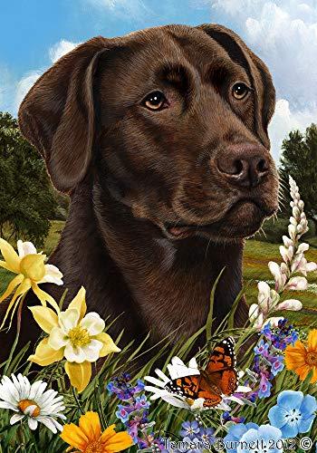 Best of Breed Labrador chocolat - pavillons de jardin de fleurs d'été