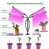 Zoom IMG-1 colmanda lampada per piante 40w