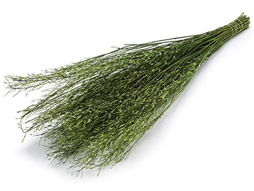 NaDeco Sarash Bündel grün ca. 110cm grünes Dekobündel grünes Weidenbündel Naturdeko grün grüne Dekozweige grüne Dekoäste