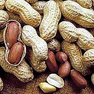 Virginia Peanut 30 Seeds - Start Indoors in Pots - Fun