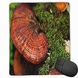 MUYIXUAN Alfombrilla Raton Log Ganoderma Close Lingzhi Setas Alimentos Naturaleza Gotas de rocío Alfombrilla Gaming Alfombrilla para computadora con Base de Goma Antideslizante,250×300×3mm