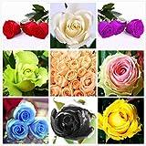 Eantpure Perennes Resistentes para balcón,Primavera de semilla de Rosa, Cuatro Estaciones, fácil de fluir, floración-250 cápsulas_Maria,Semillas de Plantas Verdes