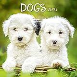 Dogs 2021: Broschürenkalender mit Ferienterminen. Hunde und Welpen. 30 x 30 cm