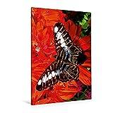CALVENDO Lienzo Premium de 80 cm x 120 cm de Alto, diseño exótico con Sonido, Imagen sobre Lienzo auténtico. Mariposa exótica Animales Animales