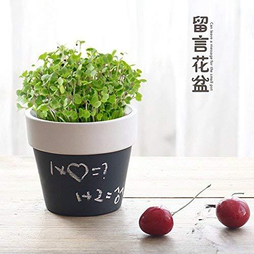 Nouveau design en céramique message Flowerpot Avec Graines de plantes Plantes Petite Jardinière Succulent bricolage Potted Jardin Décoration bureau