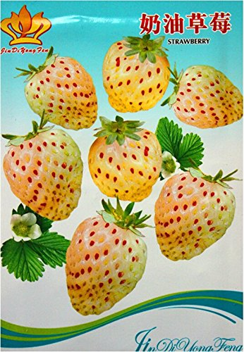 Crème Graines bio blanc Fraise, emballage d'origine, 40 graines / Pack, Tasty non-ogm Seeds Strawberry Bonsai # KK011