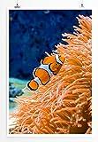 Eau Zone Home Bild - Naturbilder – Clownfisch am Orangen