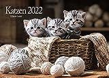 Niedlicher Katzenkalender