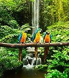 Fototapete selbstklebend blau-gelbe Papageien - 90x100 cm -