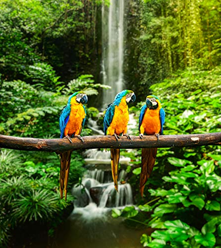 Fototapete selbstklebend blau-gelbe Papageien - 90x100 cm - Bildtapete Fotoposter Poster - Tier Tierbild Vogel Ara