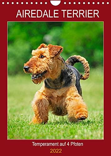 Airedale Terrier - Temperament auf 4 Pfoten (Wandkalender 2022 DIN A4 hoch)