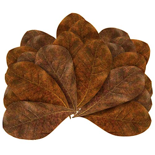 Buy Indian Almond Leaves