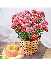 母の日 カーネーション5号鉢 花コラボ ケーキ洋菓子 花とスイーツ 花鉢 生花 母の日のプレゼント フラワーギフト (ピンク)