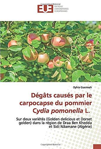 Dégâts causés par le carpocapse du pommier Cydia pomonella L.: Sur deux variétés (Golden delicious et Dorset golden) dans la région de Draa Ben Khedda et Sidi Nâamane (Algérie)
