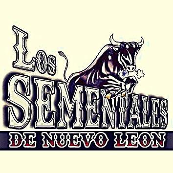 Los sementales de nuevo Leon (En Vivo)