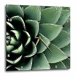 3dRose DPP_92676_1 Agave Cactus Succulent, Santa Fe, New Mexico-Us32 Jmr0454-Julien McRoberts-Wall Clock, 10 by 10-Inch