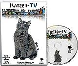 Katzen-TV - Fernsehen für Fellnasen - Vol. 1 - Der ultimative Katzenspaß! Das Geschenk für Katzen - Video für Katzen