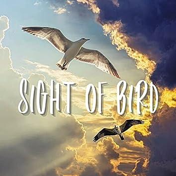 Sight of Bird