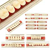 3 Set Of 84 Full Mouth Denture Dental Acrylic Resin Teeth for Halloween Horror Teeth A2 L425 /32