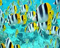 ChuYuszb 大人のためのパズル1000個のDiy熱帯魚の海の写真家の装飾のための素敵なギフト