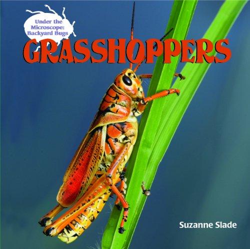 Grasshoppers (Under the Microscope: Backyard Bugs)