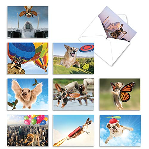 The Best Card Company - 10 Blank Animal Cards Boxed (4 x 5.12 Inch) - Assorted Pets, Zoo, Wildlife Cards for Kids - The Flying K9 M6448OCB