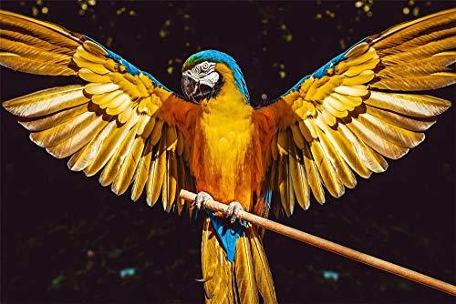N\A Lienzo DIY Pintura Al Óleo Manualidades para Pintar Pintura por Numeros Adultos Niños - Loro Pájaro Alas Plumas 40X50Cm