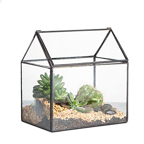 Meilleur terrarium